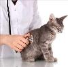 Ветеринарные клиники в Канске